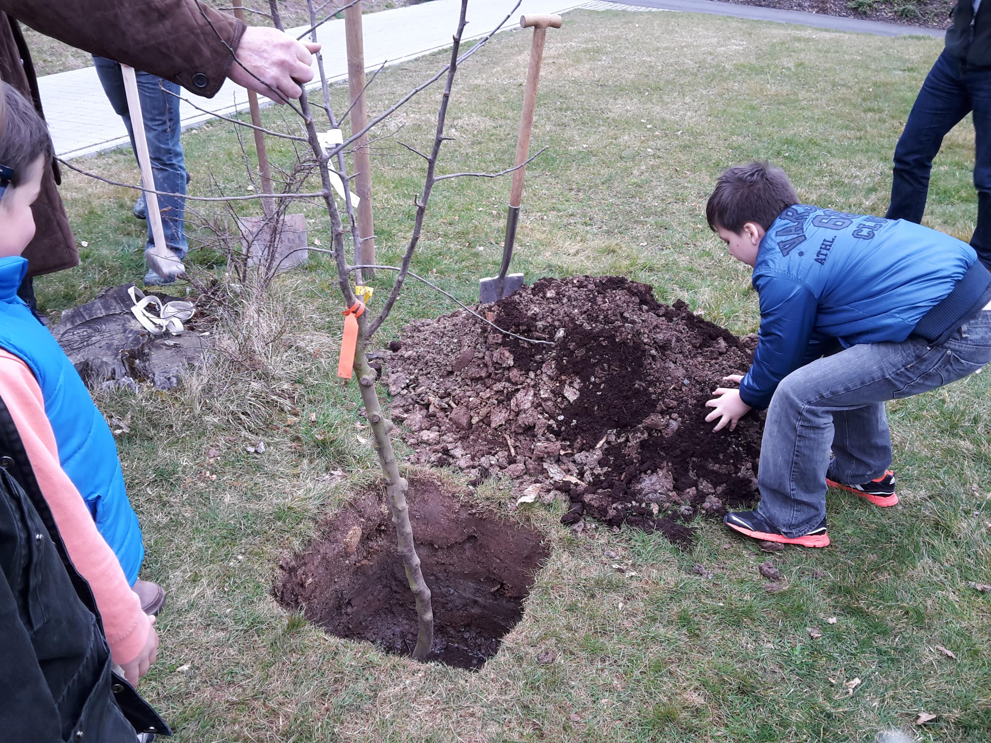 wir pflanzen einen apfelbaum grundschule n sttal. Black Bedroom Furniture Sets. Home Design Ideas